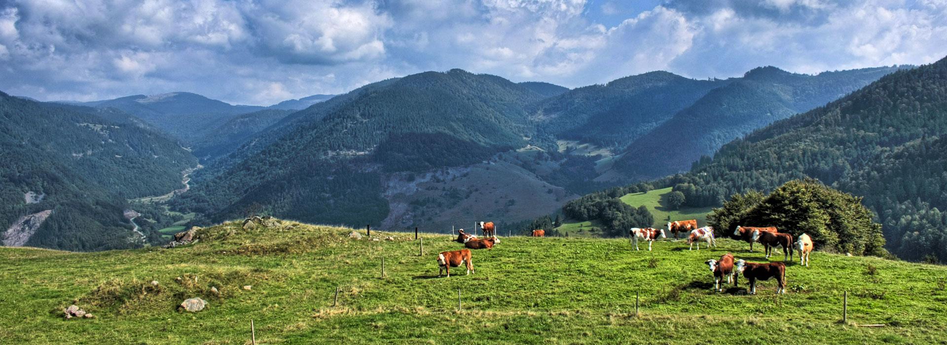 ©Naturpark Südschwarzwald